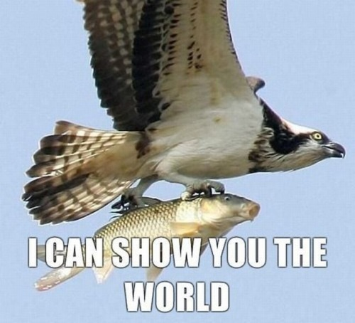 Show you the world.jpg
