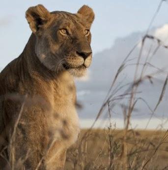My Inner Lioness.jpg
